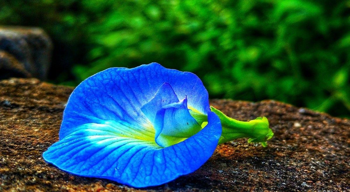 Les fleurs naissent