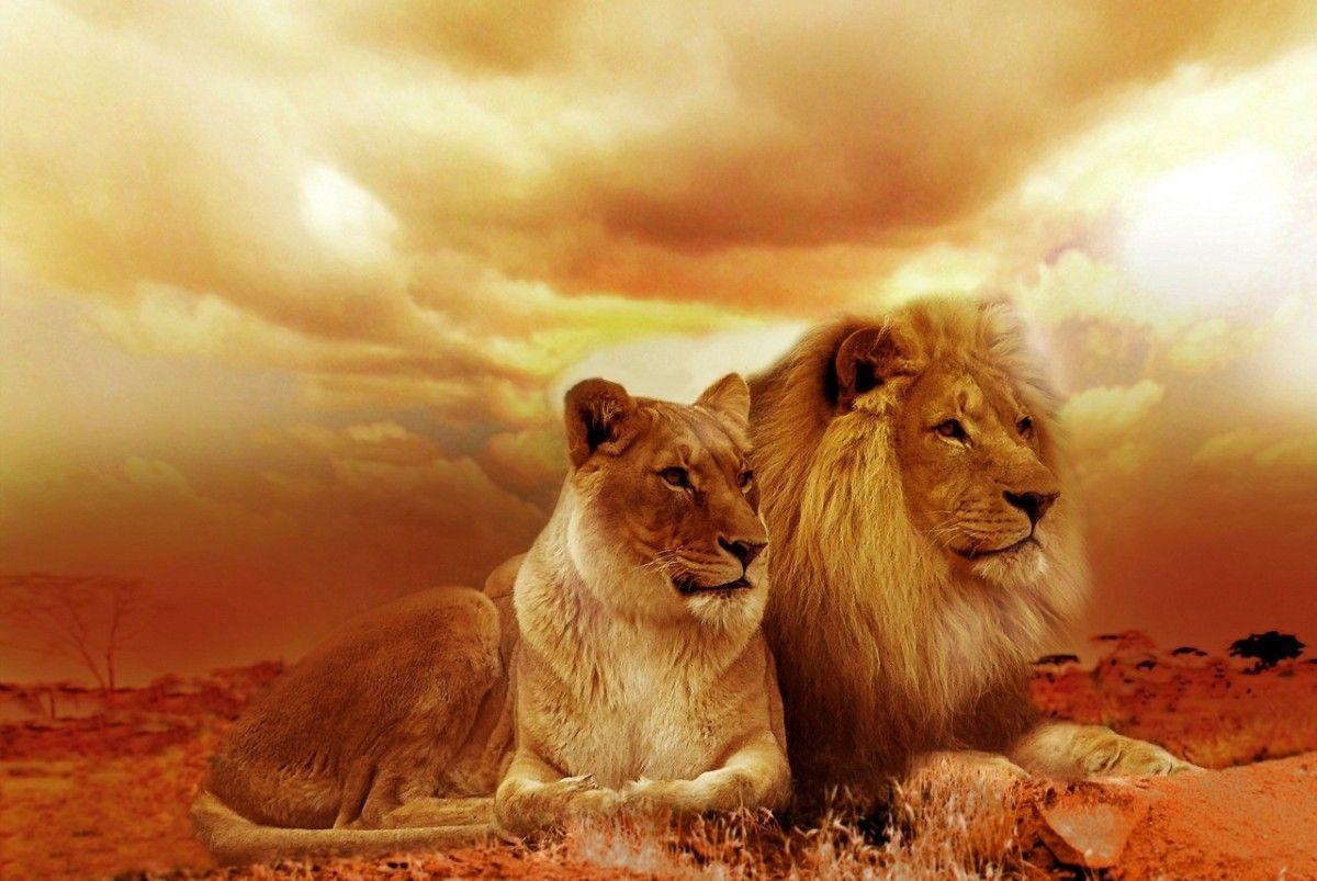 vous êtes une LIONNE