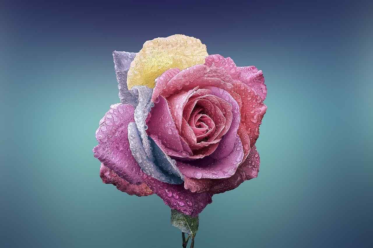 fleur du bien